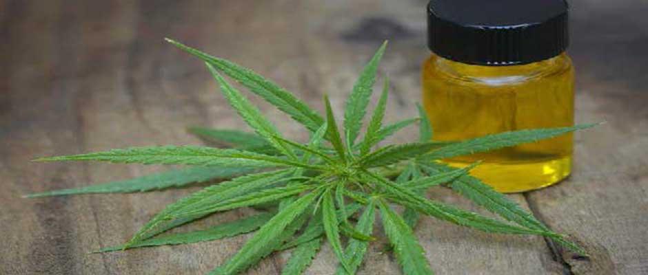 Marijuana Laws Update